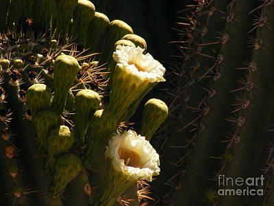Marilyn Photograph - Saguaro Spotlight by Marilyn Smith