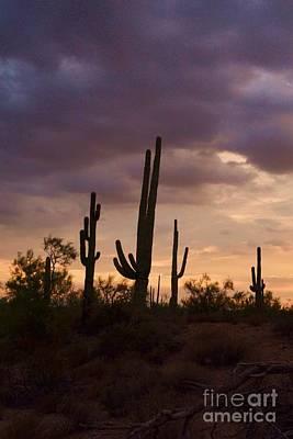 Saguaros After The Storm Art Print by Patty Descalzi