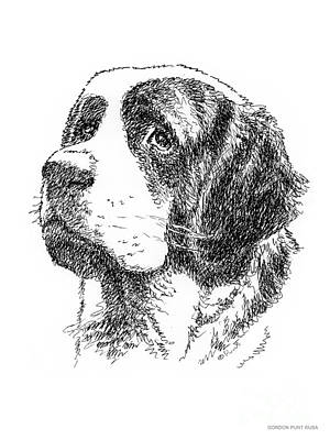Drawing - Saint-bernard-drawing by Gordon Punt