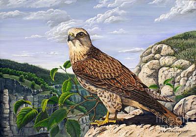 Saker Falcon Falco Cherrug Art Print