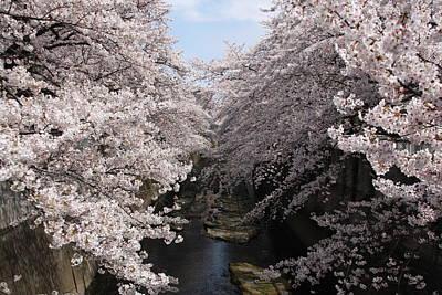 Sakura Tree Near River Art Print by Matsmasa