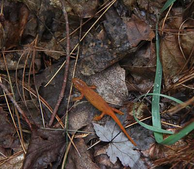 Photograph - Salamander by Lali Partsvania