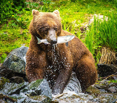 Craig Brown Photograph - Salmon Fishing In Alaska by Craig Brown