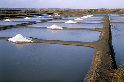 Salt Pans Art Print by Veronique Leplat