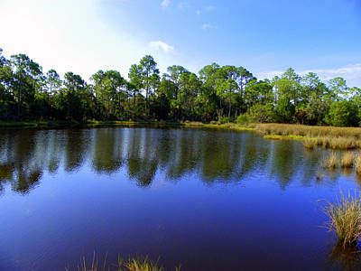 Photograph - Saltwater Pond I by Sheri McLeroy