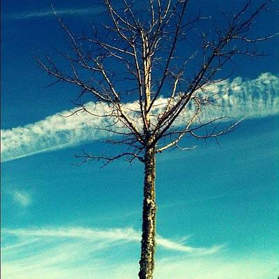 Angle Photograph - Same #tree Different #angle (: #sky by Seth Stringer
