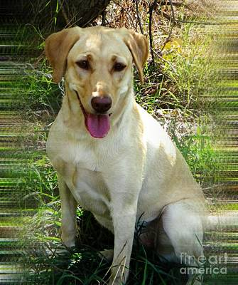 Retrievers Digital Art - Sammie by Michelle Frizzell-Thompson