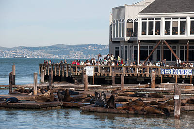 Photograph - San Francisco - Pier 39 by Gary Rose
