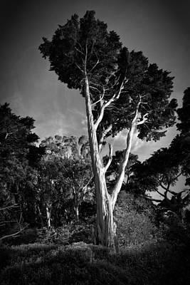 San Francisco Tree Art Print