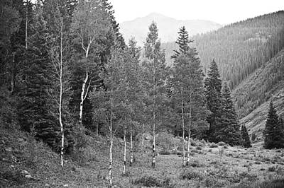 Photograph - San Juan National Forest by Melany Sarafis