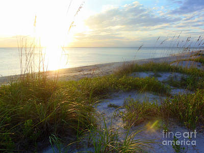 Photograph - Sand Dunes Sunset by Lou Ann Bagnall