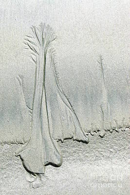 Photograph - Sandy Trees by Frank Townsley