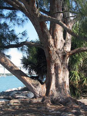 Painting - Sand Key Tree by Clara Sue Beym