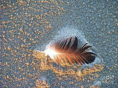 Photograph - Sand Sculptured Feather  by Michele Penner