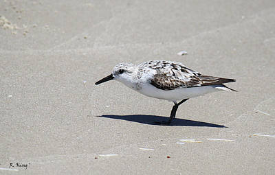Photograph - Sanderling On The Beach by Roena King