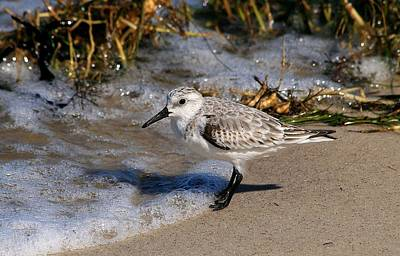 Photograph - Sanderling With Wave by Ira Runyan