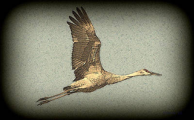 Photograph - Sandhill Crane In Flight by T Guy Spencer