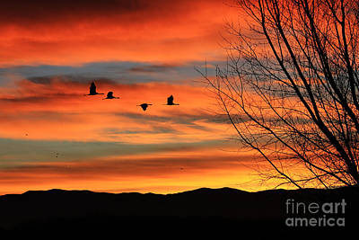 Sandhill Crane Sunrise Art Print by Val Armstrong