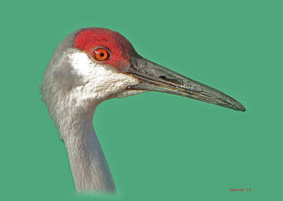 Photograph - Sandhill Crane by T Guy Spencer