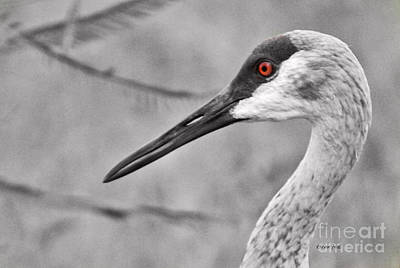 Photograph - Sandhill Crane Up-close by Terri Mills