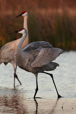Sandhill Cranes Original