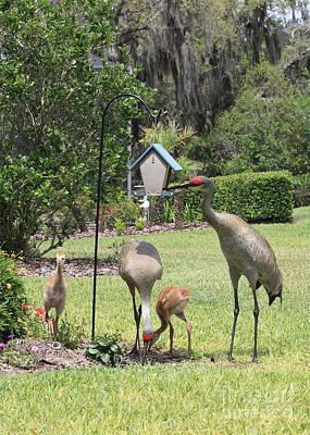 Baby Bird Photograph - Sandhill Garden Party by Carol Groenen