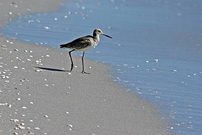 Photograph - Sandpiper 2 by Joe Faherty