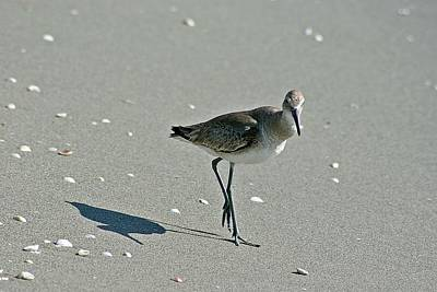 Photograph - Sandpiper 3 by Joe Faherty