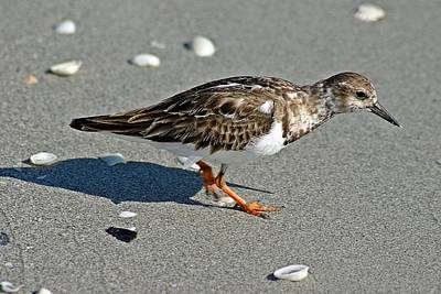 Photograph - Sandpiper 9 by Joe Faherty
