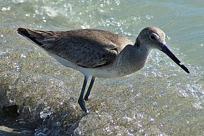 Photograph - Sandpiper I by Joe Faherty