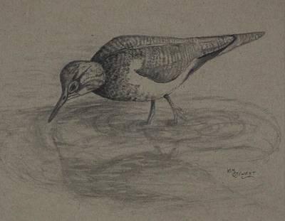 Sandpiper Drawing - Sandpiper by Kim Stewart