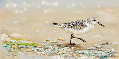 Sandpiper Drawing - Sandpiper Study One by Bob Manthey