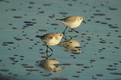 Photograph - Sandpipers by Gerald Hiam