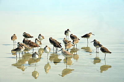 Flock Of Bird Photograph - Sandpipers by Photo credit John Dreyer