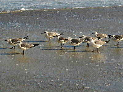 Photograph - Sandpipers by RobLew Photography