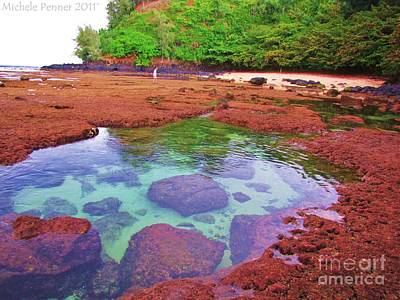 Photograph - Sandy Bottom Tide Pool by Michele Penner