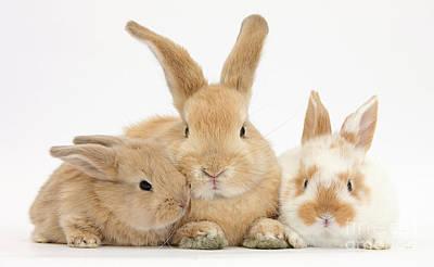 Rabbit Photograph - Sandy Rabbit And Babies by Mark Taylor
