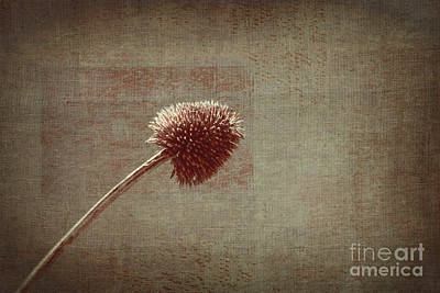 Plants Wall Art - Photograph - Sans Nom - S03p11t05 by Variance Collections