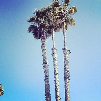 California Wall Art - Photograph - Santa Monica Palm Trees by Cortney Herron