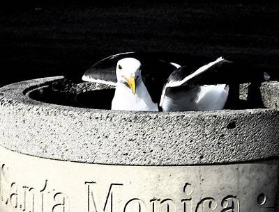 Photograph - Santa Monica Pigeon by Patricia Januszkiewicz