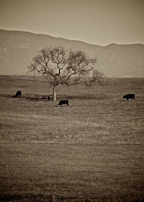 Photograph - Santa Ynez Pasture by Matt MacMillan