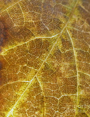 Photograph - Satellite Leaf by Michael Canning