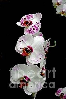 Photograph - Saucy Orchid by Joan McArthur
