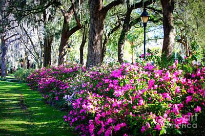 Photograph - Savannah Spring Perspective by Carol Groenen