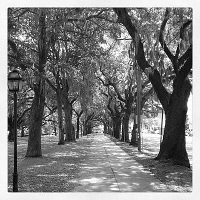 Pathway Photograph - Savannah's Willow by Kenny Kerns