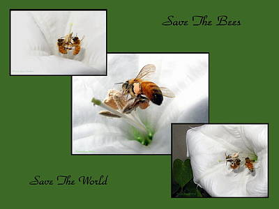 Photograph - Save The Bees Save The World by Joyce Dickens