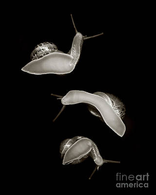 Scanography Photograph - Save The Snails by Janeen Wassink Searles