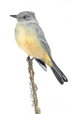 Say's Phoebe Original by Donald Sutherland