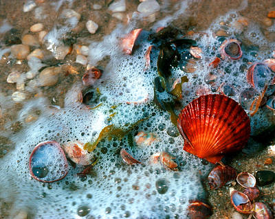 Art Print featuring the photograph Scallop And Seaweed 11c by Gerry Gantt