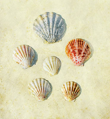 Scallop Shells Art Print by Paul Grand Image